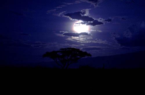 La Notte - La Notte Dei Cavalieri